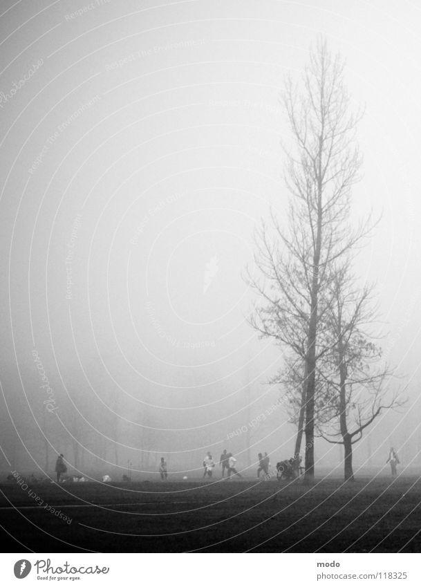 Fog II The Englischer Garten Grief Tree Meadow Clouds Winter Autumn Soccer Human being Lawn Walking Tall