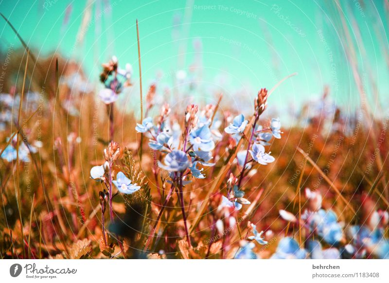 a bed in a...flower field Nature Plant Sky Cloudless sky Spring Summer Autumn Beautiful weather Flower Grass Leaf Blossom Wild plant Veronica Garden Park Meadow