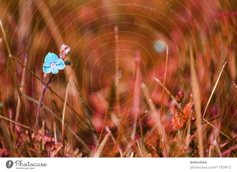 Nature Blue Plant Beautiful Summer Flower Leaf Spring Blossom Autumn Meadow Grass Small Garden Exceptional Brown