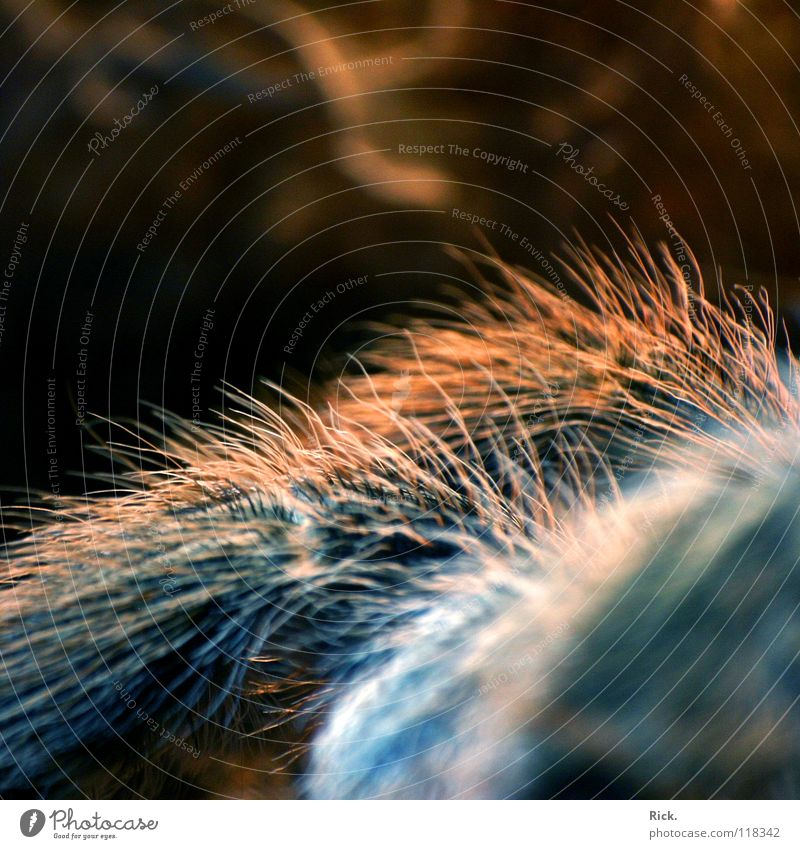Nature Blue Black Animal Hair and hairstyles Legs Fear Orange Speed Retro Threat Net Soft Insect Pelt Creepy
