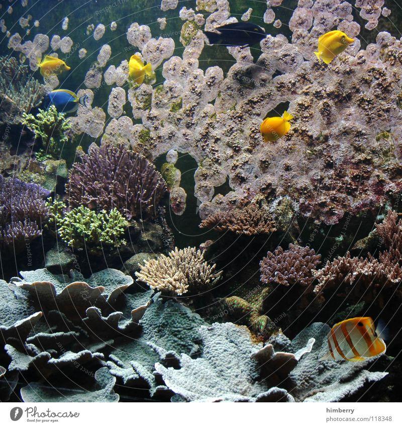 fishtank IV Aquarium Coral Ocean Fish Water