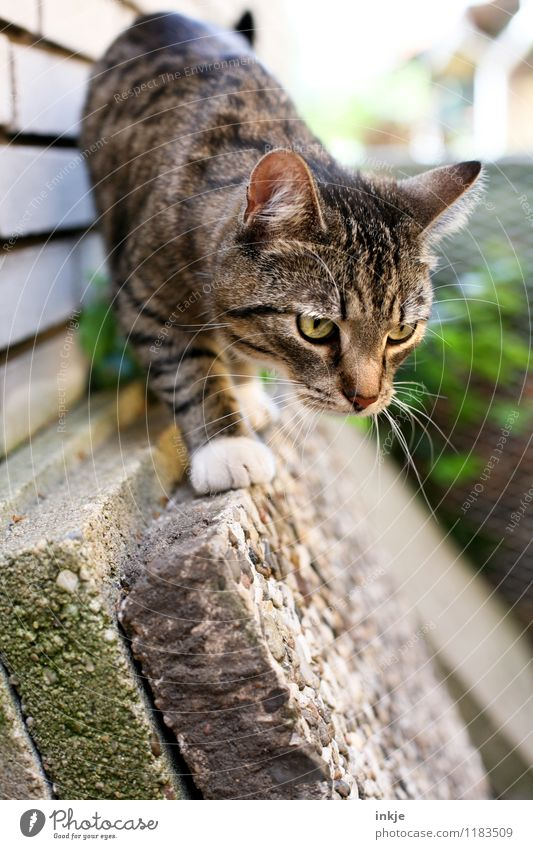 Louise is lurking. Garden Pet Cat Animal face 1 Baby animal Observe Discover Hunting Looking Small Curiosity Cute Emotions Interest Concentrate Colour photo