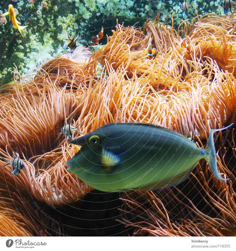 Water Ocean Fish Aquarium Coral