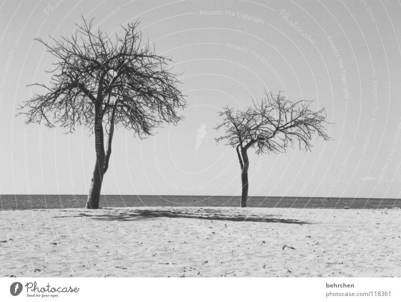 deserted Black & white photo Deserted Shadow Calm Vacation & Travel Summer Beach Ocean Sand Water Sky Warmth Tree Coast Hot Dry White Loneliness Cuba Physics