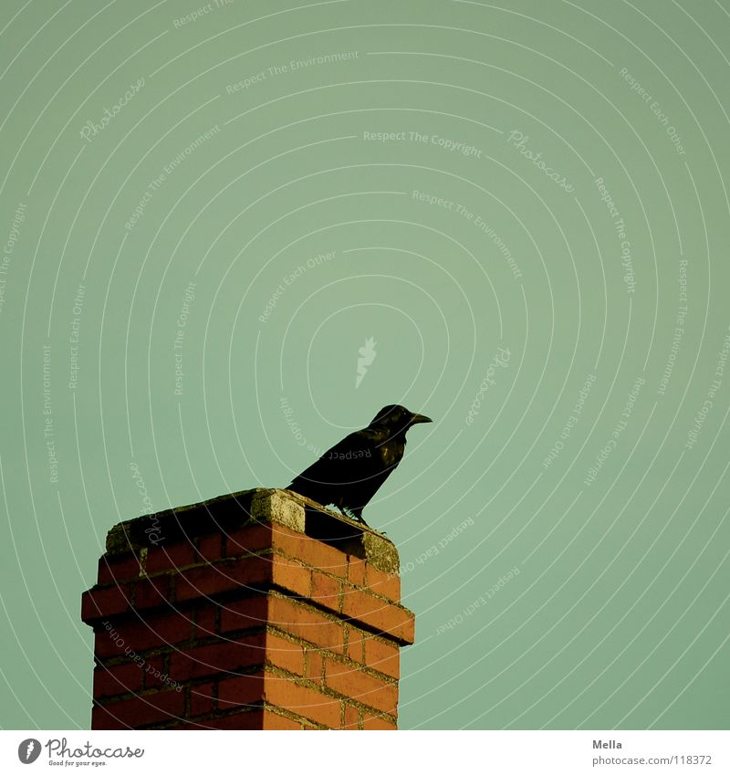 Old Black Dark Bird Sit Vantage point Feather Transience Derelict Brick Chimney Mystic Beak Pull Soul Crouch
