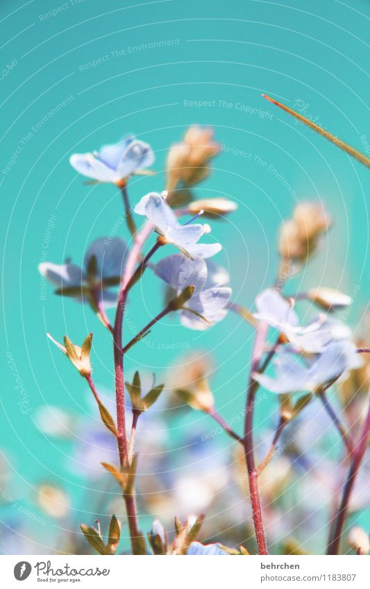 Sky Blue Plant Beautiful Summer Flower Landscape Leaf Spring Blossom Autumn Meadow Grass Garden Park Field