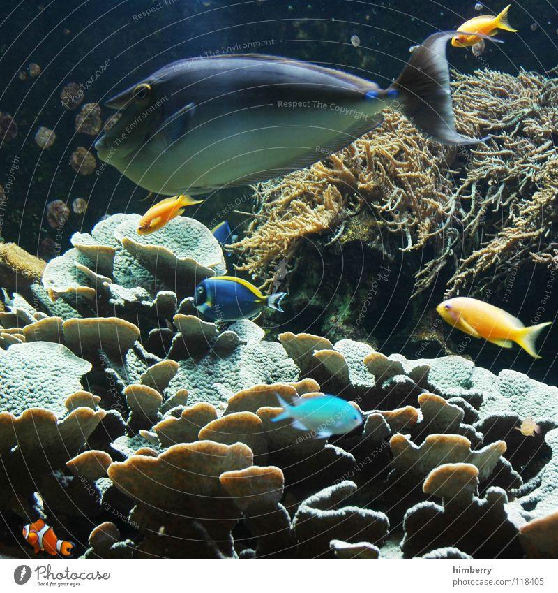 fishtank VI Aquarium Coral Ocean Fish Water