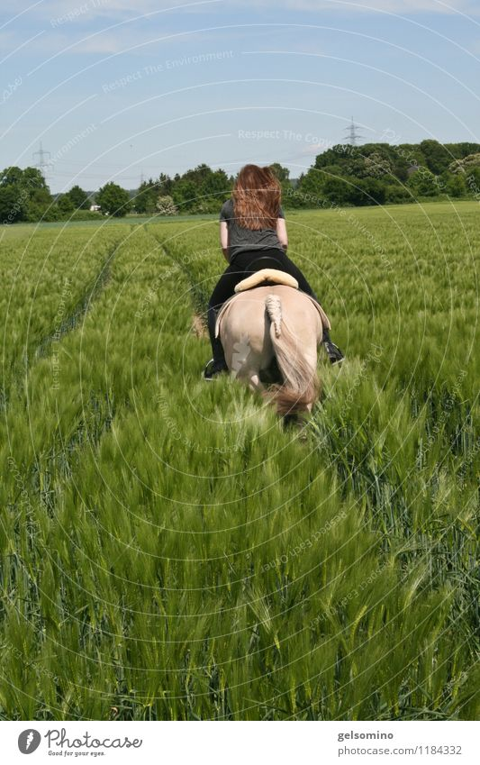 off through the hedge Hair and hairstyles Equestrian sports Ride Feminine Back 1 Human being Nature Agricultural crop Field Red-haired Horse Walking Running