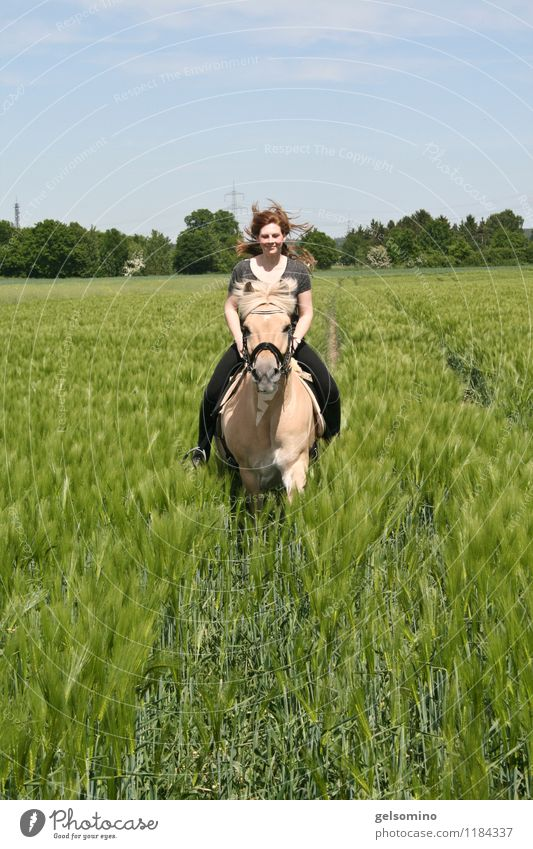 hop hop hop gallop Feminine Young woman Youth (Young adults) Hair and hairstyles 18 - 30 years Adults Nature Wind Agricultural crop Field Red-haired Horse Pelt