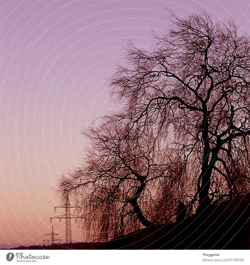 Nature Sky Tree Pink Industry Energy industry Electricity Violet