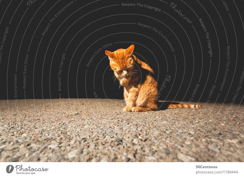 Cat Animal Calm Black Yellow Emotions Moody Gold Esthetic Arrangement Sit Friendliness Clean Pet Caution Patient