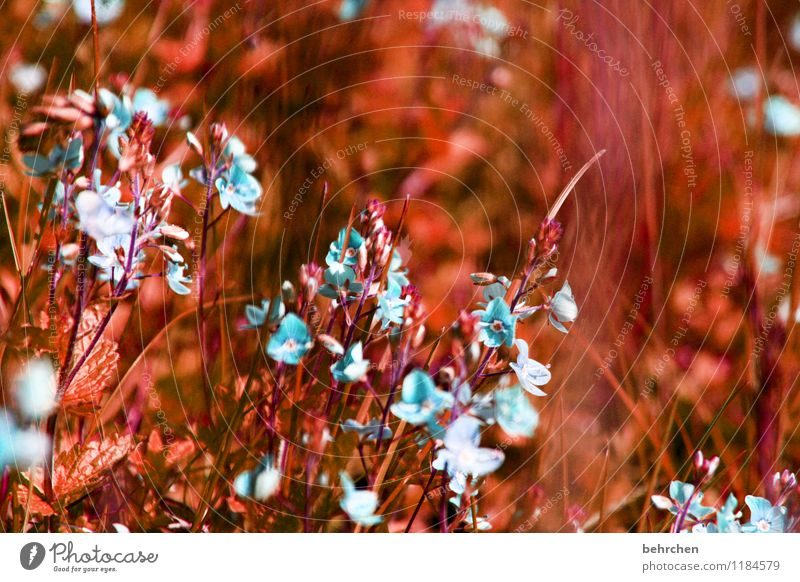 earwig Environment Nature Plant Spring Summer Autumn Beautiful weather Flower Grass Leaf Blossom Veronica Garden Park Meadow Field Blossoming Growth Small Blue