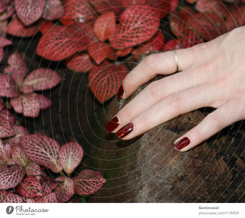 Woman Nature Hand Beautiful Plant Red Leaf Colour Feminine Emotions Stone Brown Skin Adults Fingers Esthetic