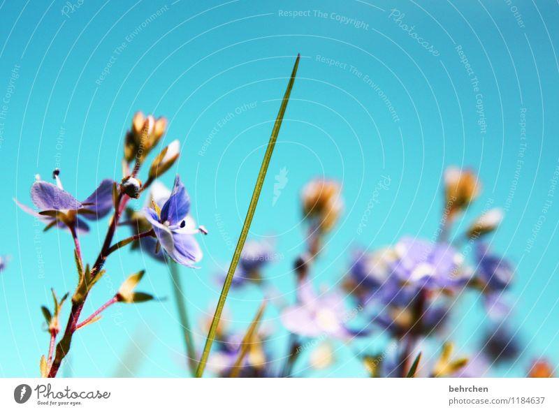 Sky Nature Blue Plant Beautiful Summer Flower Leaf Calm Warmth Spring Blossom Autumn Meadow Grass Garden