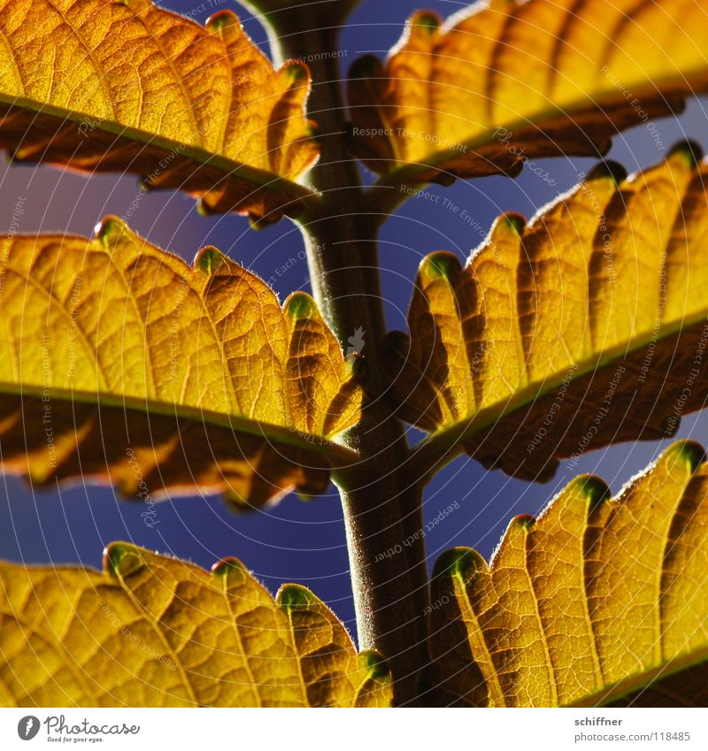 <100> Details on leaf style Leaf Style Summer Plant Lighting Bright leaf structure Sun Warmth Colour Gold Macro (Extreme close-up)