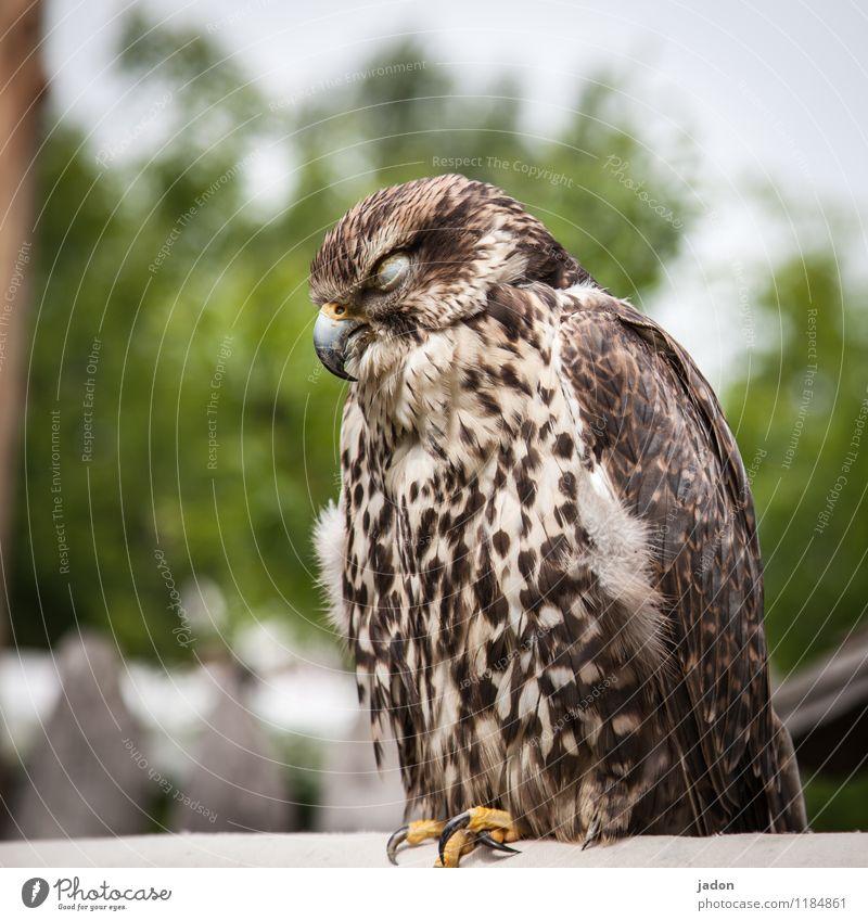 listening post. Body Relaxation Animal Wild animal Bird Wing 1 Sleep Sit Cool (slang) Safety (feeling of) Watchfulness Calm Exhaustion Nature Bird of prey Hawk