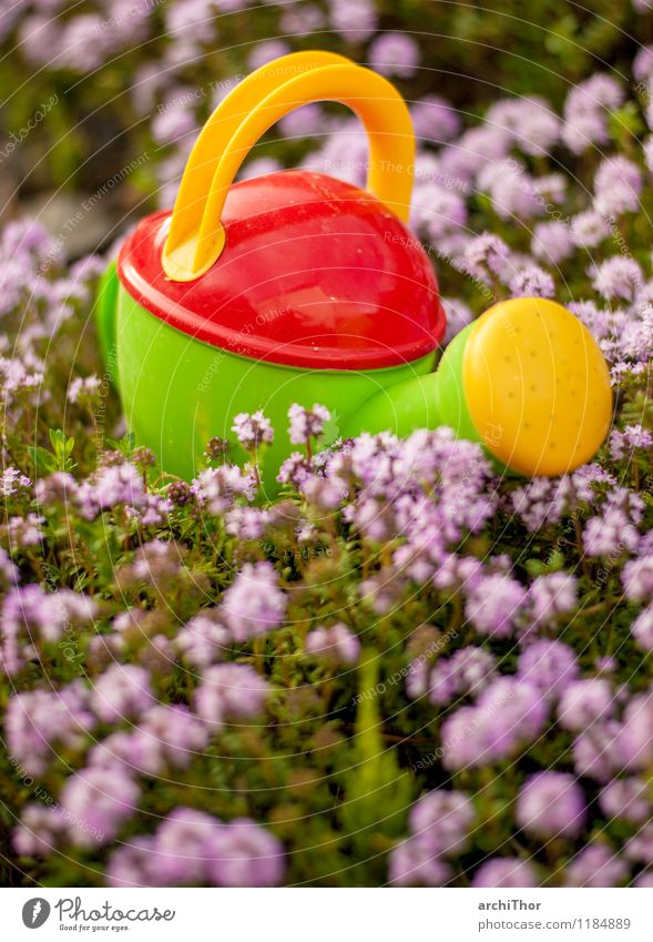 water cannon Gardening Summer Nature Plant Spring Thyme Watering can Toys children's watering can Plastic Blossoming Cute Yellow Green Violet Orange Red Joy