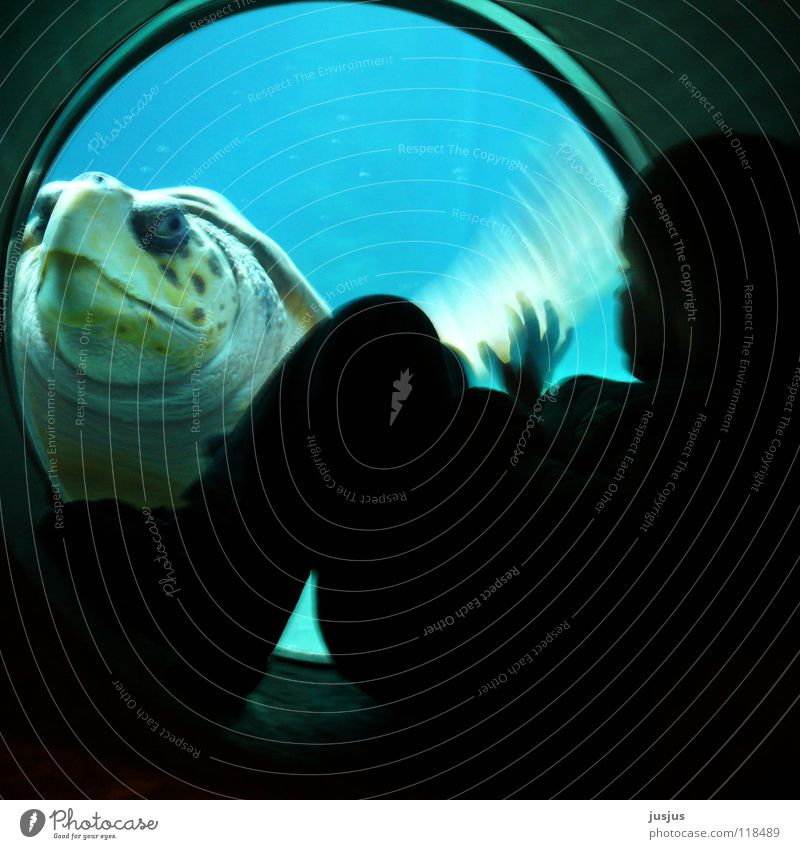 Child Old Ocean Blue Animal Underwater photo Dive Mysterious Aquarium Environmental protection Wave Encounter Turtle Armor-plated Sea water