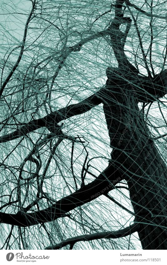 Sky Tree Winter Dark Cold Life Sadness Power Wild animal Fantastic Branch Threat Mysterious Grief Tree trunk Symbols and metaphors