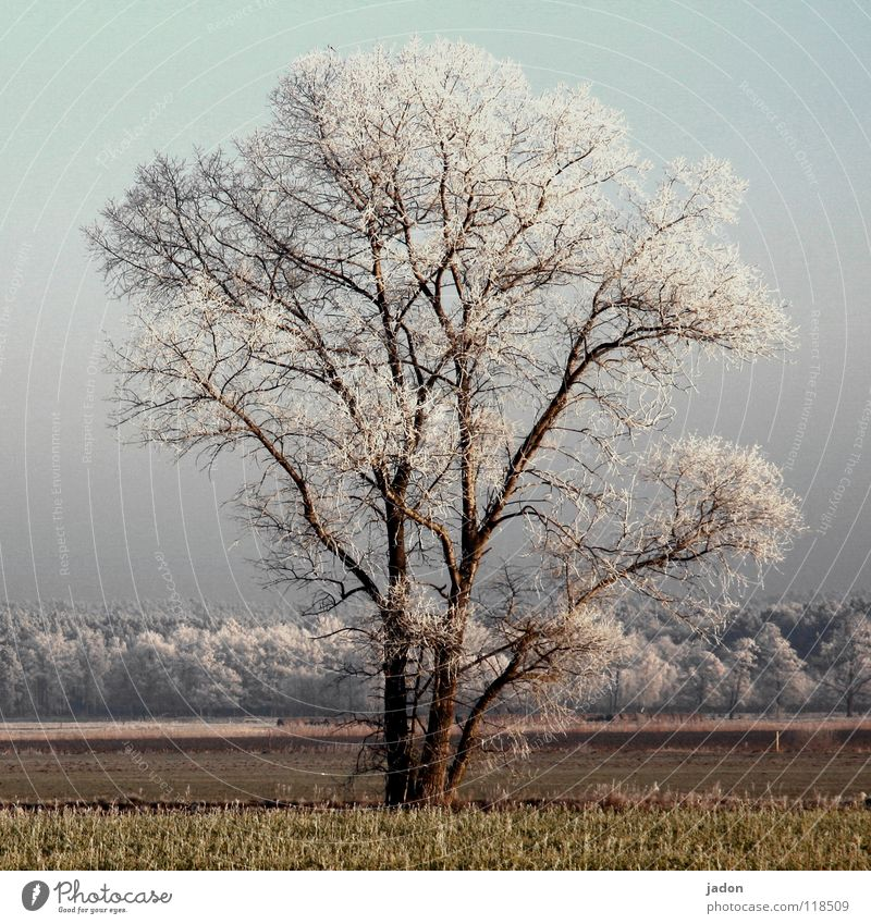 Old Tree Plant Winter Calm Loneliness Far-off places Forest Cold Snow Landscape Ice Field Safety Frost Ladder