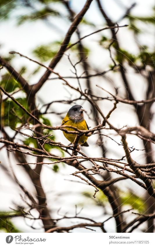 small yellow bird Environment Nature Landscape Beautiful weather Plant Tree Forest Argentina Animal Wild animal Bird 1 Cold Blue Yellow Green Calm Colour photo