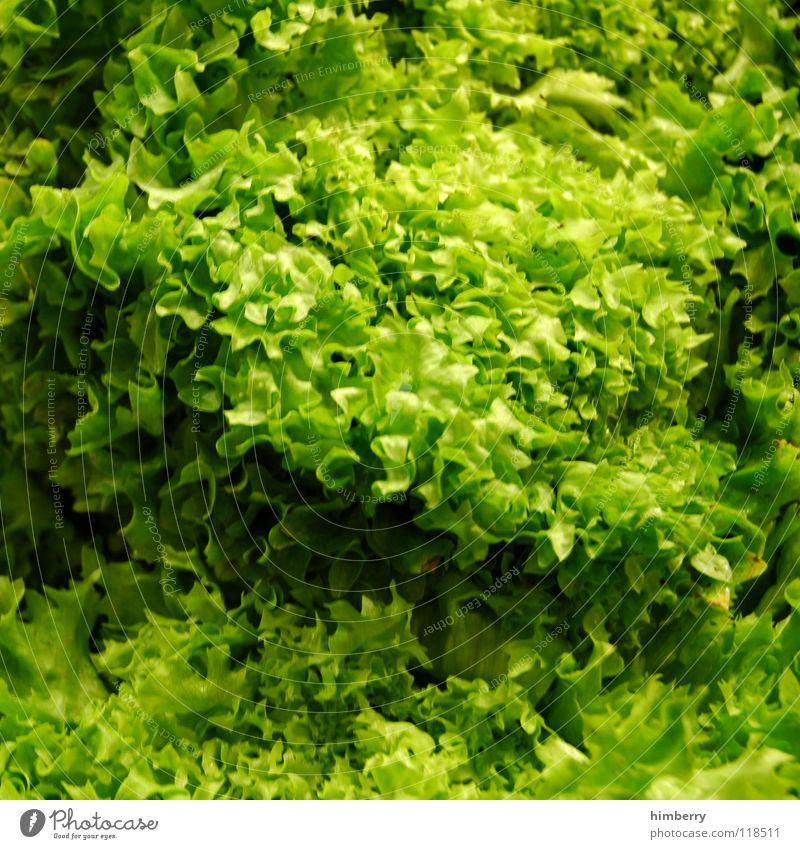 Green Nutrition Healthy Food Vegetable Markets Ecological Vitamin Lettuce Organic farming Foliage plant Vegetarian diet