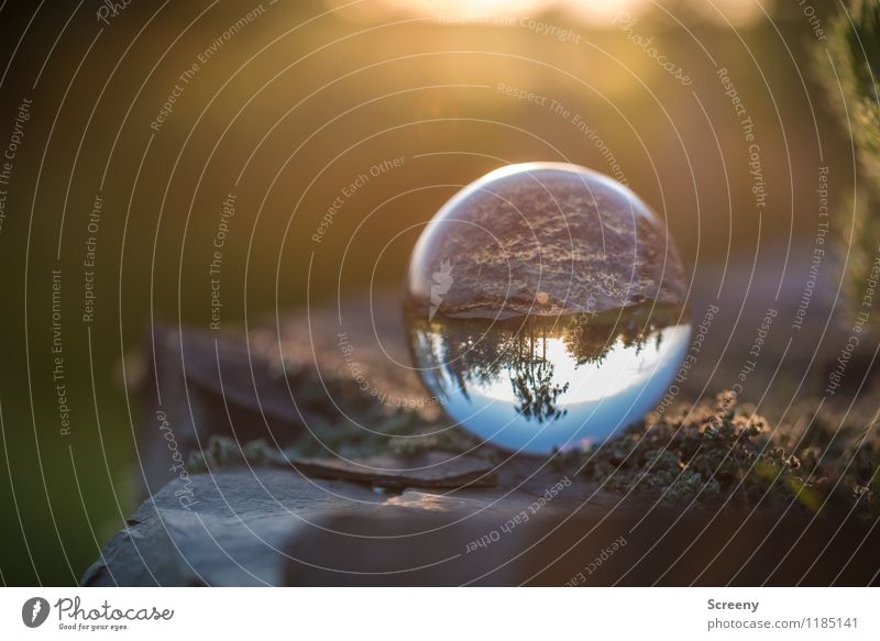 Nature Plant Summer Landscape Spring Meadow Stone Field Idyll Glass Beautiful weather Round Serene Patient Glass ball Crystal ball