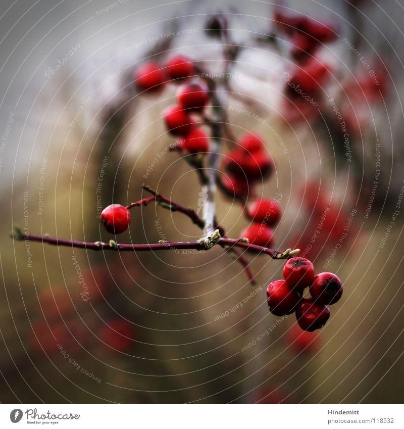 Green Beautiful Red Plant Winter Calm Life Dark Nutrition Autumn Think Bright Brown Food Bird Glittering