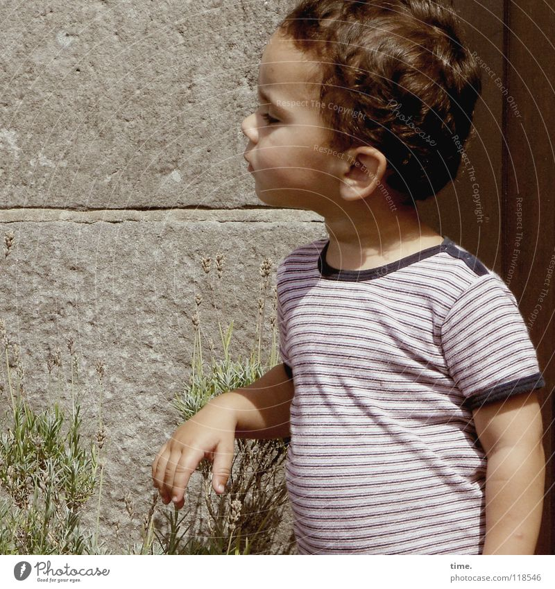 Child Plant Summer Boy (child) Wall (barrier) T-shirt Curiosity Concentrate Stomach Skeptical Behavior