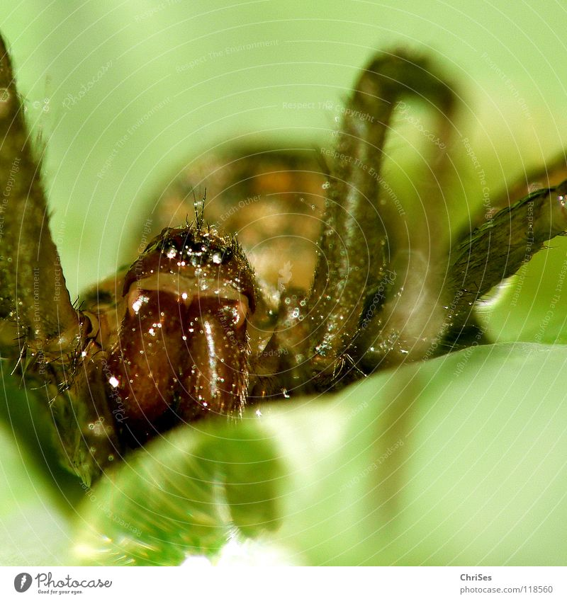 Water Green Animal Fear Drops of water Net Insect Panic Spider Spider's web Northern Forest Woven