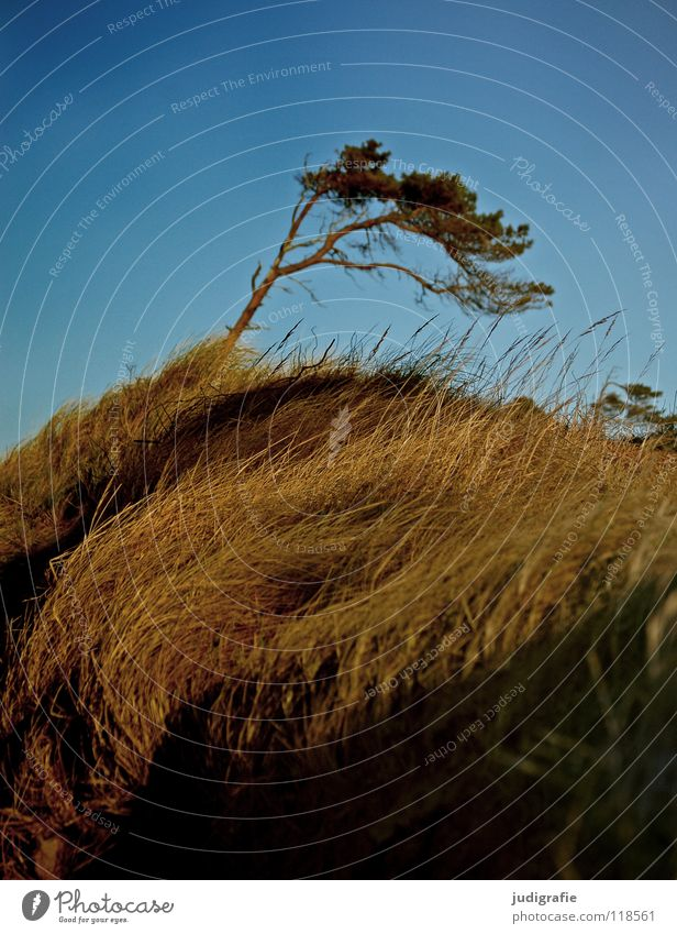 Sky Nature Green Beautiful Beach Colour Environment Landscape Meadow Grass Coast Weather Wind Beach dune Baltic Sea Passion