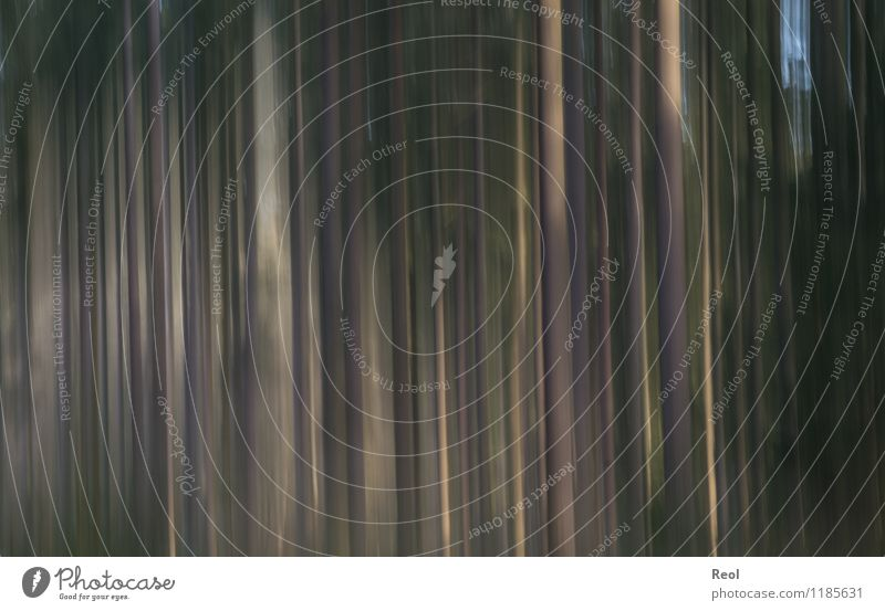 forest Nature Tree trunk Forest Dark Brown Green Movement Abstract Blur Background picture Surrealism Colour photo Subdued colour Exterior shot Pattern