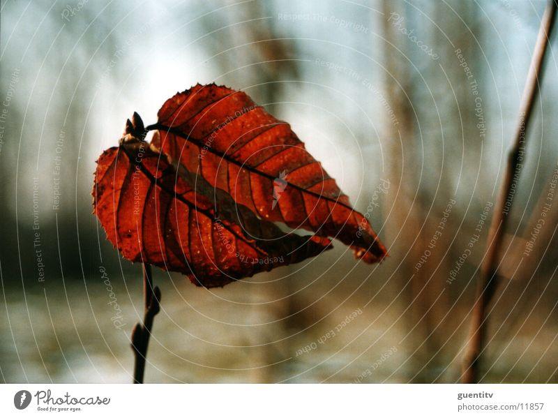 autumn Leaf Autumn Flower Plant Nature Landscape