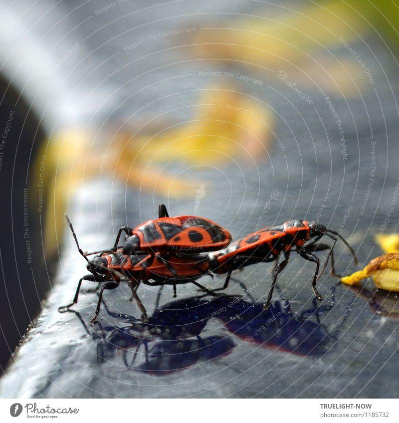 In the spotlight. Ramp sows?! Environment Nature Sun Sunlight Summer Beautiful weather Garden Animal Beetle Common fire bug (Pyrrhocoris apterus) 3