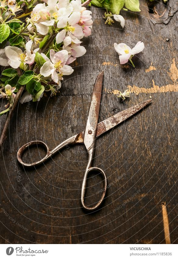 Old scissors and spring flowers Style Design Summer Garden Nature Plant Spring Leaf Blossom Bouquet Retro Yellow Moody Spring fever Fragrance Arranged Vintage