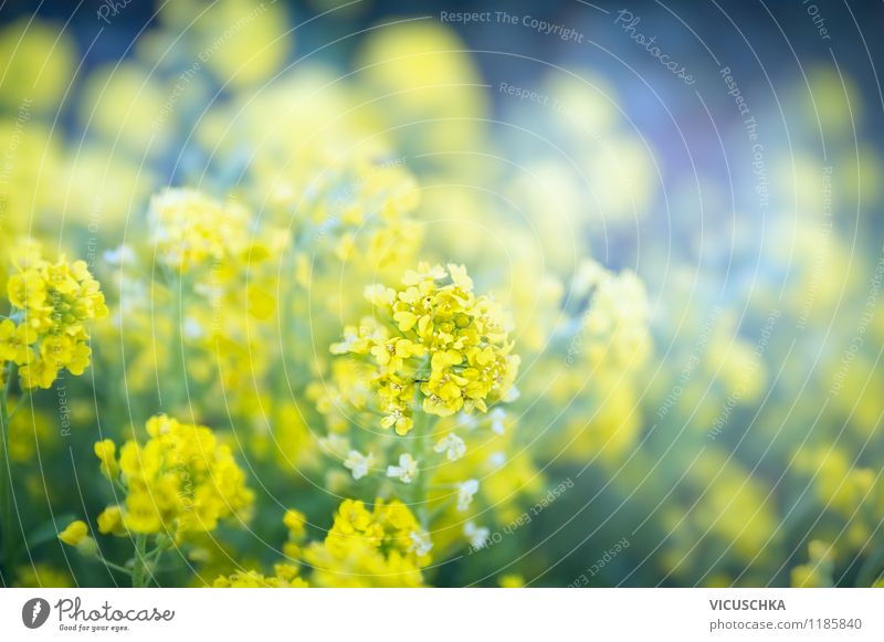 Yellow flowers in the garden Style Design Summer Garden Nature Plant Spring Autumn Flower Leaf Blossom Park Background picture Abstract Exterior shot Flowerbed