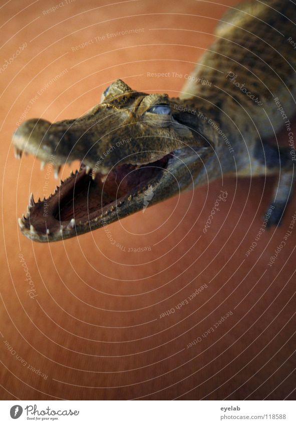 No dog II Dog Crocodile Alligator Animal Carpet Fitted carpet Brown Green Trust Handbag Aggravation Argument Paw Reptiles Pet Safety Nightmare Feeding Appetite
