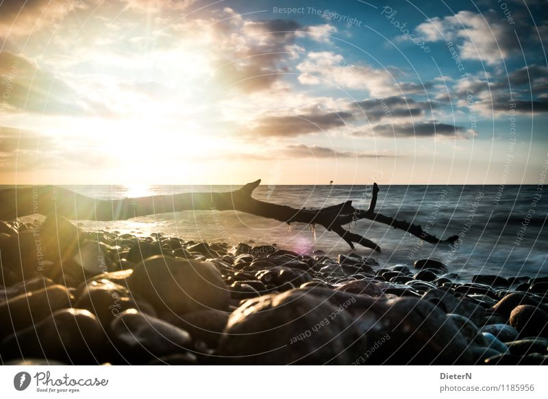 backlight Environment Landscape Water Sky Clouds Horizon Waves Coast Baltic Sea Blue Yellow Black Stone Tree trunk Driftwood Colour photo Exterior shot Deserted