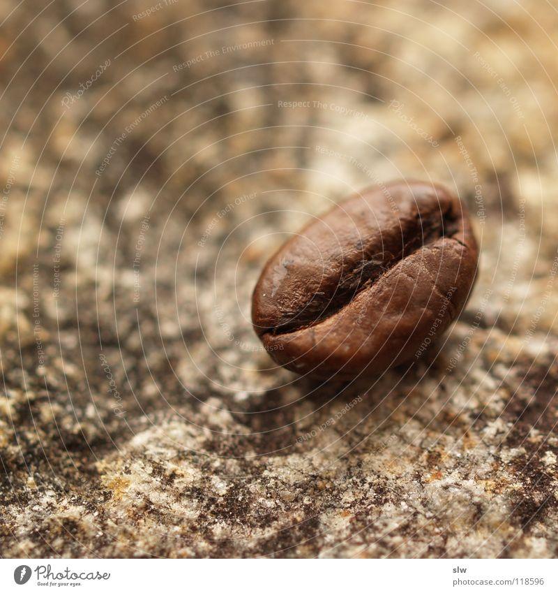 Stone Coffee To enjoy Brazil Coffee bean Caffeine Dairy Products