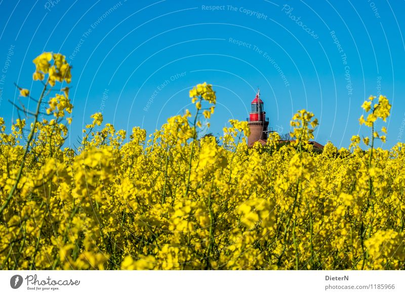 jutting Environment Landscape Plant Sky Cloudless sky Spring Beautiful weather Agricultural crop Field Coast Baltic Sea Blue Yellow Red Canola Canola field