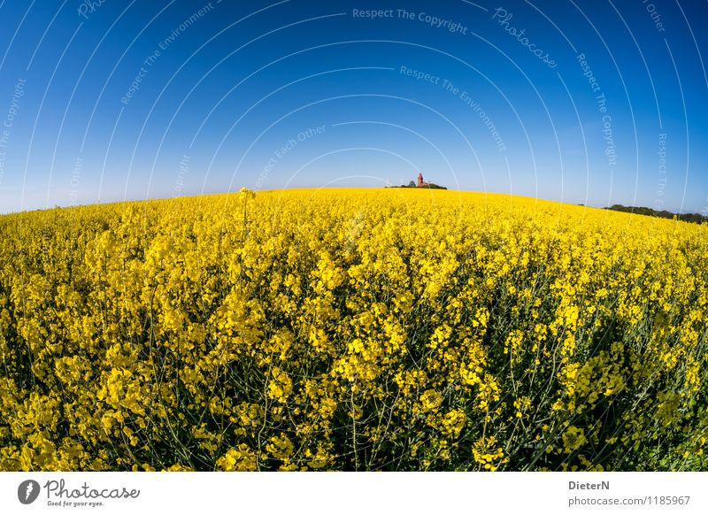 round Environment Sky Cloudless sky Spring Plant Agricultural crop Field Coast Lighthouse Manmade structures Building Architecture Landmark Blue Yellow Green