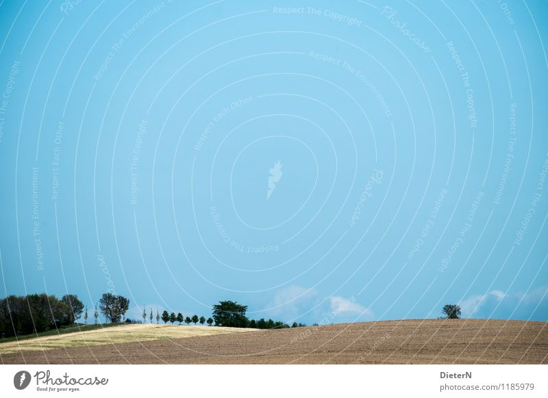 fields Environment Nature Landscape Sand Air Sky Cloudless sky Spring Plant Tree Agricultural crop Field Forest Blue Brown Green Colour photo Subdued colour