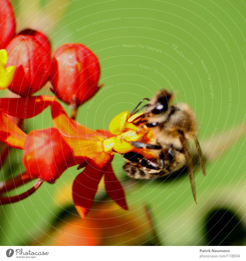 Nature Green Summer Red Plant Flower Animal Yellow Nutrition Spring Blossom Fresh Near Bee Insect Collection
