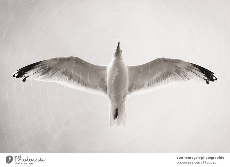 Sky Freedom Flying Bird Feather Animal foot Wing Future Grand piano Seagull Floating Beak Flight of the birds