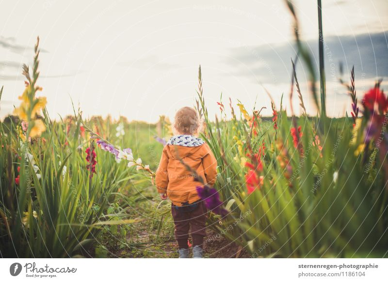 Human being Child Nature Plant Summer Flower Spring Meadow Grass Boy (child) Garden Park Field Infancy Baby Blossoming