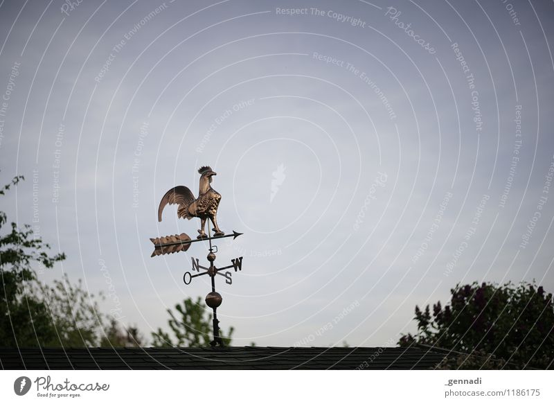 Animal Wind Advice North Pinwheel Roadside calvery Rooster Trend-setting Compass point Wind direction