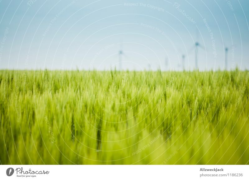 Nature Green Horizon Energy industry Field Beautiful weather Grain Wind energy plant Cloudless sky Environmental protection Sustainability Juicy Wheat