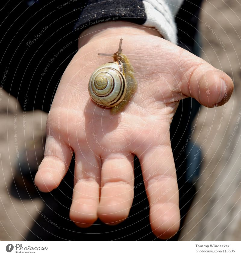 snail whisperers Child Girl Hand Children`s hand Fingers Investigate Curiosity Look after Snail shell Feeler Animal Sunlight Vineyard snail Mucus Suck-up Crawl