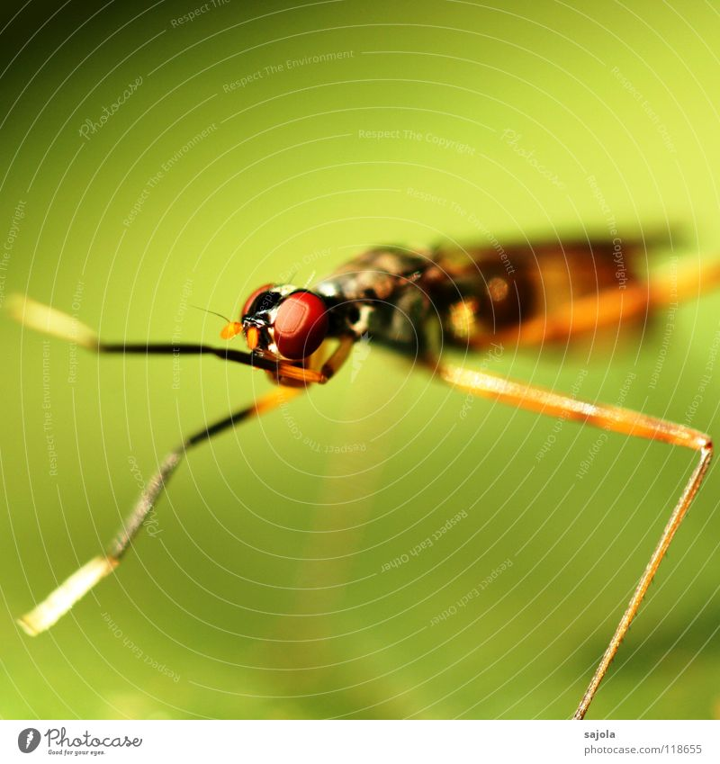 Another fly! Virgin forest Animal 1 Thin Red Insect Legs Eyes Head Singapore Asia Paw Cleaning Delicate Colour photo Multicoloured Exterior shot Close-up Detail