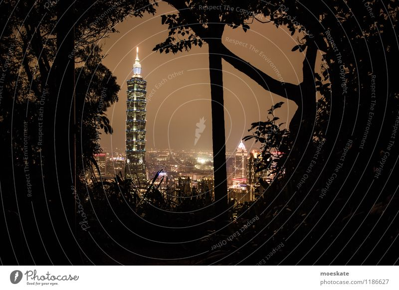 Taipei 101 Tree Taiwan Asia Town Capital city Downtown Outskirts Skyline House (Residential Structure) High-rise Bank building Park Manmade structures Building